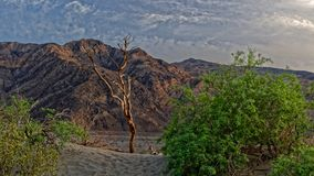 Sand dunes in Death Valley. Sand dunes and vegetation in Death Valley with hills in the background Royalty Free Stock Photo