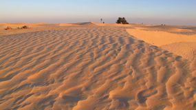 Sand dunes in the desert Royalty Free Stock Image