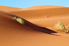 Sand dunes in the desert Stock Images