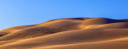 Sand dunes in the desert. Beautiful sand dune in sunrise in the desert Royalty Free Stock Photo