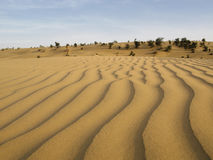 Sand dunes in desert. Sand dunes in Thar Desert, India Royalty Free Stock Photos