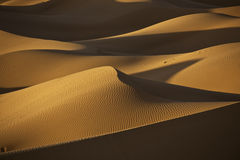 Sand dunes in the desert. Sand dunes in evening light in the Moroccan Sahara Royalty Free Stock Photography