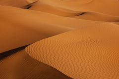Sand dunes in the desert. Sand dunes in the morning light in the Sahara desert Royalty Free Stock Photography