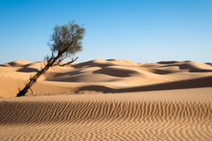 Sand dunes in the desert of Sahara Stock Photo