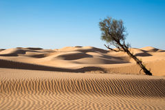 Sand dunes in the desert of Sahara Royalty Free Stock Photography