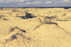 Sand dunes, dry grass and a small bush, white clouds on the blue sky on the horizon.  royalty free stock photo