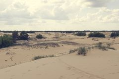 Sand dunes, dry grass and a small bush, white clouds on the blue sky on the horizon.  royalty free stock images