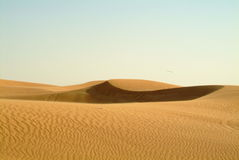 Sand dunes of Dubai Royalty Free Stock Image