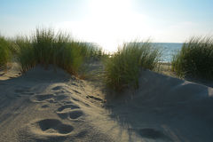 Sand dunes with dunes grass on the North Sea with sunlight Stock Photography