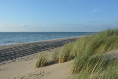 Sand dunes with dunes grass on the North Sea royalty free stock photography
