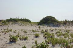 Sand Dunes Ecosystem. A natural landscape of sand dunes on the coast of Assateague State Park island seashore. These sand dunes are fragile ecosystems and Stock Image