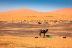 Sand Dunes of Erg Chebbi int he Sahara Desert, Morocco Royalty Free Stock Photos