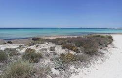 Sand dunes. Of es trenc on spanish island mallorca Stock Image