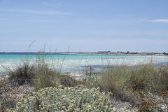 Sand dunes. Of es trenc on spanish island mallorca Royalty Free Stock Images