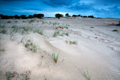 Sand dunes in evening Royalty Free Stock Photo