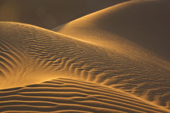 Sand dunes in evening sun. Sand dunes glow in the evening sun in the moroccan Sahara desert Stock Photos
