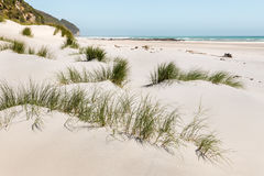 Sand dunes at Farewell Spit beach in New Zealand. Grass growing on white sand dunes at Farewell Spit beach in New Zealand Royalty Free Stock Photography