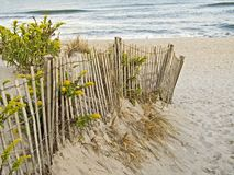 Sand Dunes and Fence. A fence, sand dunes and goldenrod along the New Jersey shore Stock Photo