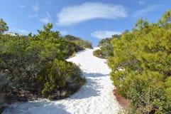 Sand dunes in Florida panhandle. Beautiful white sand dunes with rocks in the Florida panhandle royalty free stock photos
