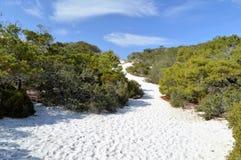Sand dunes in Florida panhandle. Beautiful white sand dunes with vegetation in the Florida panhandle stock image