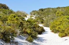 Sand dunes in Florida panhandle. Beautiful white sand dunes with vegetation in the Florida panhandle royalty free stock photos