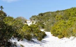 Sand dunes in Florida panhandle. Beautiful white sand dunes with vegetation in the Florida panhandle royalty free stock photography