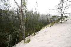 Sand dunes and forest in Slowinski National Park Royalty Free Stock Image