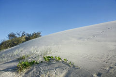 Sand dunes fraser Island Stock Images