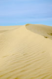 Sand dunes. Golden curved sand dune with blue sky Stock Photos