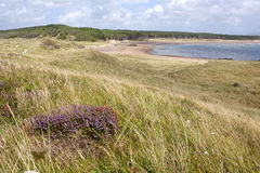 Sand dunes and grass. On the coast of Anglesey, Wales stock photo
