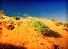 Sand dunes and grass Stock Photos