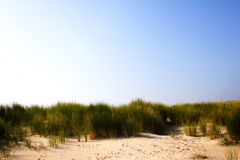 Sand Dunes with Grass on the Beach Royalty Free Stock Images