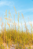 Sand dunes with grass Stock Photo