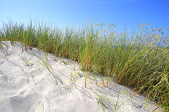 Sand dunes with grass and blue sky Royalty Free Stock Photography