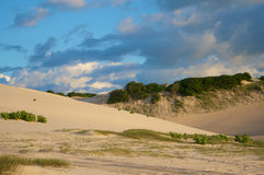 Sand dunes with grass and bush Royalty Free Stock Photo