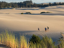 Sand dunes. Grass growing on sand dunes in the Oregon Dunes National Recreation Area on the Pacific Ocean Stock Photo