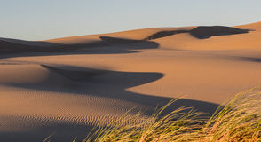 Sand dunes. Grass growing on sand dunes in the Oregon Dunes National Recreation Area on the Pacific Ocean Royalty Free Stock Images