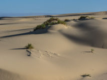 Sand dunes. Grass growing on sand dunes in the Oregon Dunes National Recreation Area on the Pacific Ocean royalty free stock photos