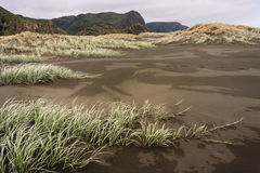 Sand dunes grass at Karekare beach Stock Image