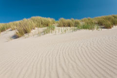 Sand dunes with grass in The Netherlands. Coastal sand dunes with grass in The Netherlands with a blue sky Royalty Free Stock Images