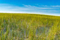 Sand Dunes and Grass of the Provincelands Cape Cod MA US. Royalty Free Stock Photography