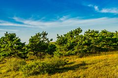 Sand Dunes and Grass of the Provincelands Cape Cod MA US. Stock Photography