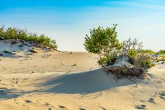 Sand Dunes and Grass of the Provincelands Cape Cod MA US. Royalty Free Stock Photo