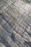 Sand dunes grass Royalty Free Stock Images