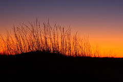 Sand dunes and grass at sunset Stock Photography