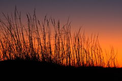 Sand dunes and grass at sunset Stock Image