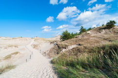 Sand Dunes And Grass Vegetation Background Royalty Free Stock Photo