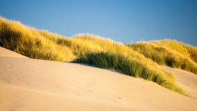 Sand dunes and grasses on a beach Stock Photo