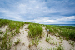 Sand dunes and grasses at Race Point, in the Province Lands at C Stock Photography