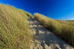 Sand dunes with helmet grass Stock Photography